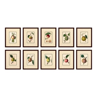 1830 Hand Colored Engravings of Fruit by Mrs. Withers For Sale