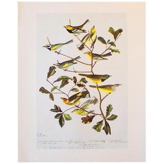1966 Warblers Vintage Print by John James Audubon For Sale