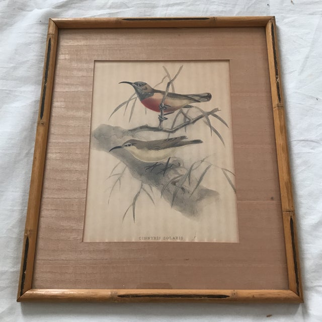 "Framed avian prints in the manner of James Audubon believed circa 1920's. Titled along bottom of each ""CINNYRIS SOLARIS""..."