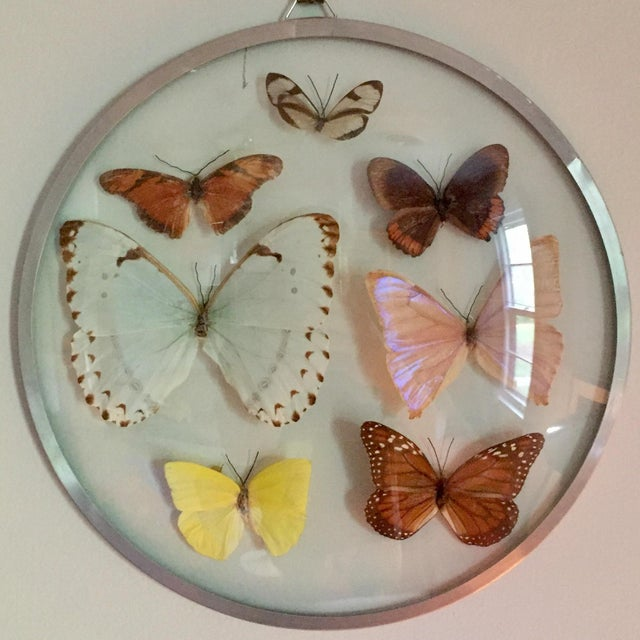 Mid-Century Modern Vintage Butterfly Specimens For Sale - Image 3 of 3