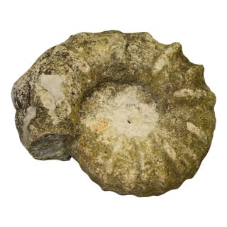 Shell Shaped Stone Fossil For Sale