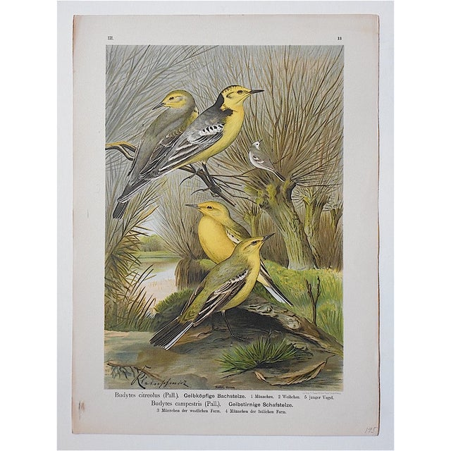 Realism Antique Lithograph - Birds For Sale - Image 3 of 3
