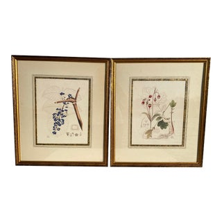 Framed Botanical Drawings - a Pair For Sale