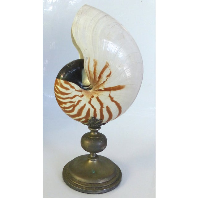 Nautilus Shell Mounted on a Brass Stand - Image 2 of 10