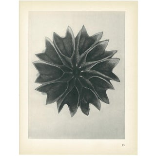 1928 Original Period Karl Blossfeldt Photogravure N63 of Abutilon Lime-Mallow For Sale