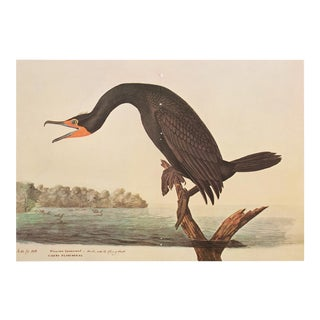 1966 XL Audubon Print of Florida Cormorant
