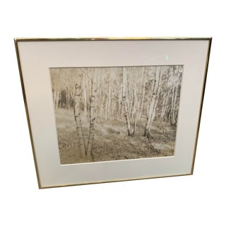 "1910 ""Birches"" Platinum Print For Sale"