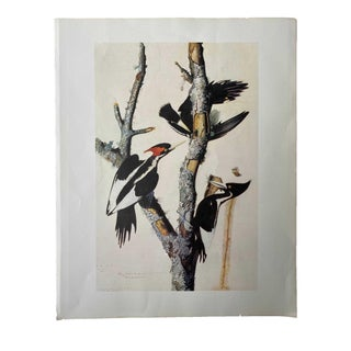 Bird Print With Three Birds For Sale