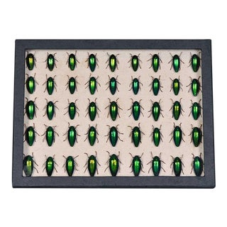 Sarreid Ltd. Black Collection Box, Beetles For Sale