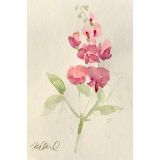 """Soft Focus"" Botanical Watercolor Painting For Sale"