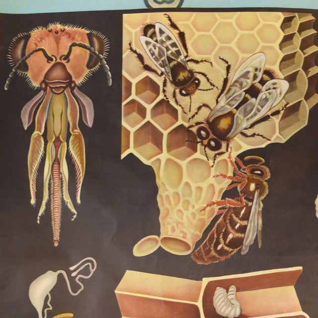 German Educational Poster of Wasps - Image 2 of 4