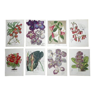 """Antique Botanical Lithographs-Flowers-Set of 8-Apprx. 9.5""""x13"""" For Sale"""