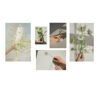 Wild: Set of 5 Contemporary Photographs by Claiborne Swanson Frank