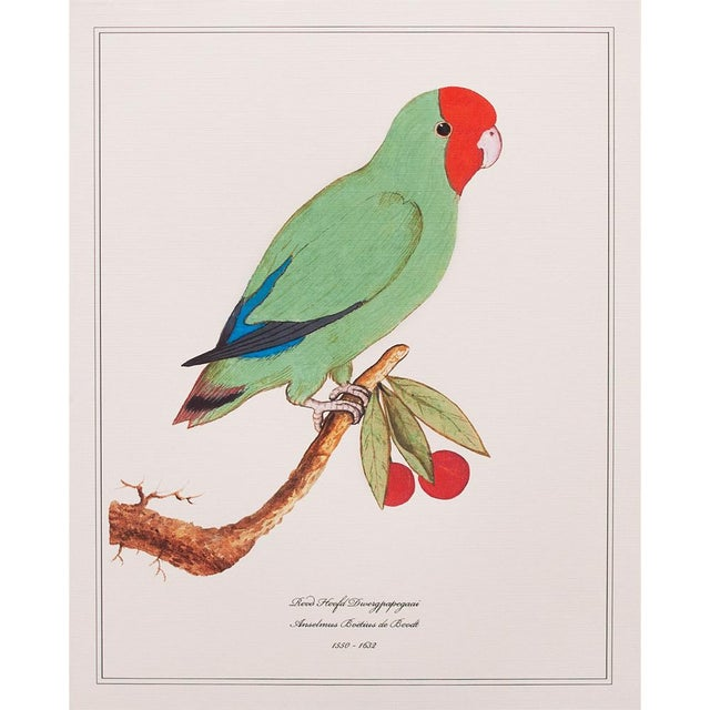 Set of 3 gorgeous reproduction prints of Lovebird, Green Parrot and Red Parrot after antique original watercolor prints by...
