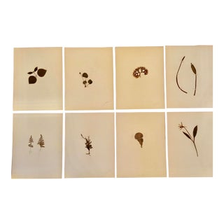 1940s Vintage Herbarium Collection - Set of 8 For Sale