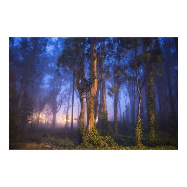 "Garret Suhrie ""Enchanted Forest"" Floating Print - Image 1 of 2"