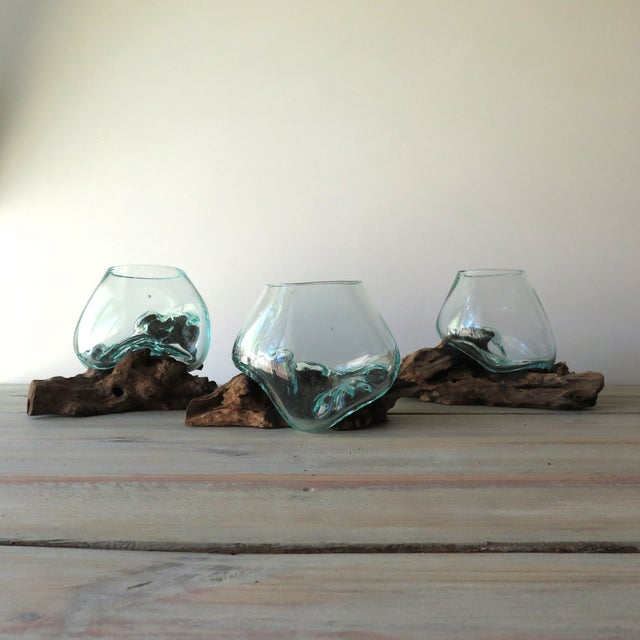 Brown Glass And Teak Driftwood Terrarium For Sale - Image 8 of 8