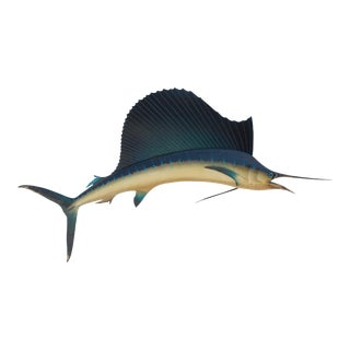 1950s Vintage Taxidermy Skin Mount Sailfish For Sale
