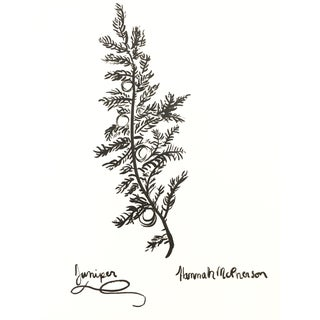 Juniper Original Drawing by Hannah McPherson For Sale