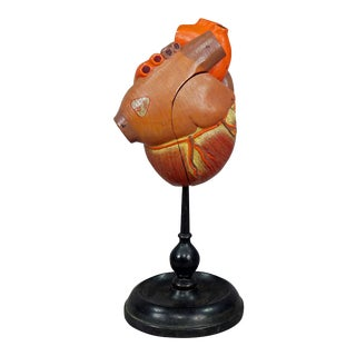 Antique Somso Plaster Model Of A Human Heart For Sale