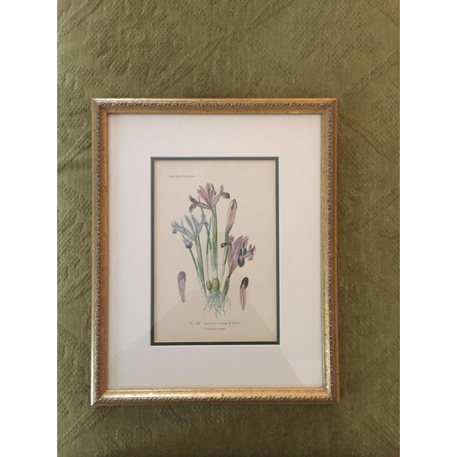 Botanical Prints - Image 3 of 4