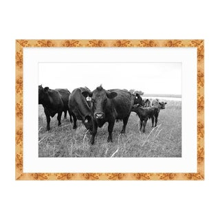 21st Century Oklahoma Ranch Photo in Burl Wood Frame With Cows and Pasture For Sale