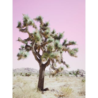 Contempoaray 'Joshua Tree - Pink' Photography by Kristin Hart, 40x52 For Sale