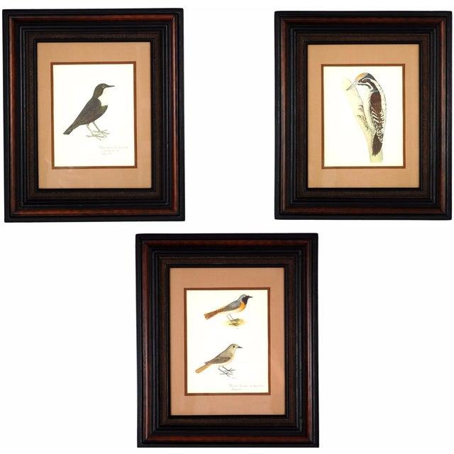 Vintage Framed Bird Prints - Set of 3 - Image 1 of 10