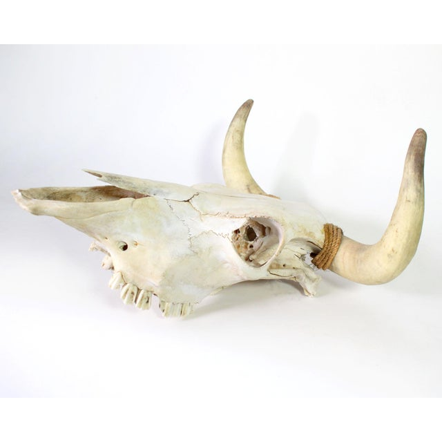 Rustic Authentic Vintage Southwestern Wall Mounted Cow Skull For Sale - Image 3 of 6
