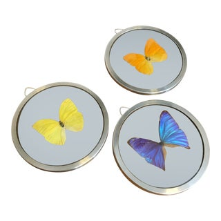 Collection of Mounted Butterflies, Set of 3 For Sale