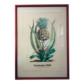 Vintage Pineapple Botanical Print in Brick Red Faux Bamboo Frame For Sale