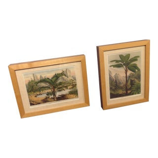 Framed Palm Prints - A Pair For Sale