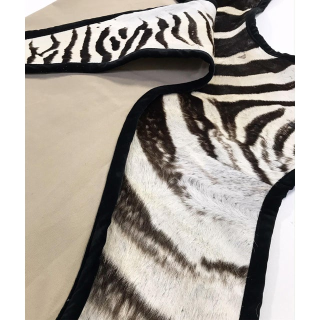 2010s Forsyth Authentic Zebra Hide Rug Trimmed in Black Velvet For Sale - Image 5 of 6