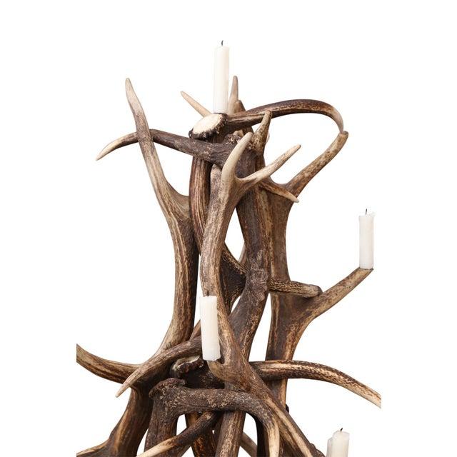 Lodge Red Stag Antler Tree-Shape Candelabra For Sale - Image 3 of 5