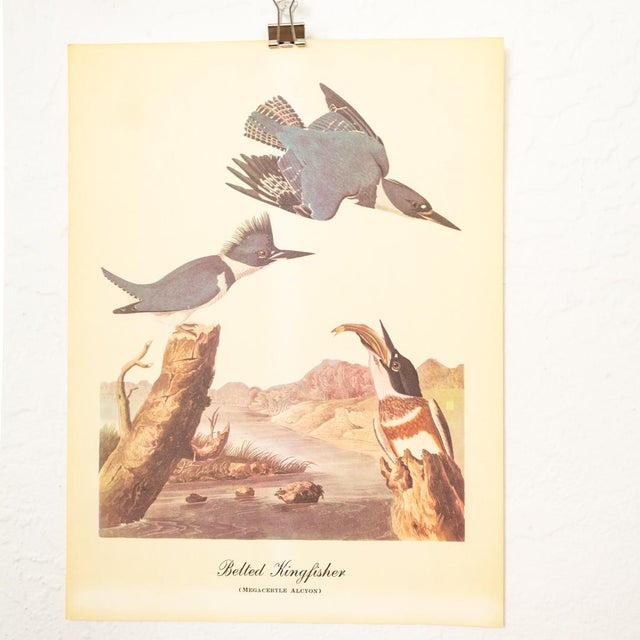 1960s Audubon Bird Prints | 17 Pc Gallery Collection For Sale - Image 12 of 13