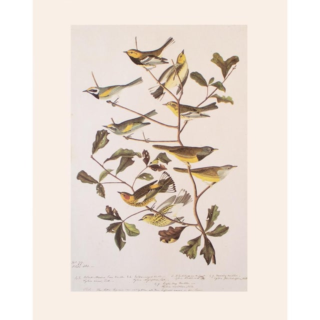 Printmaking Materials American Warblers by John James Audubon, Vintage Cottage Style Print For Sale - Image 7 of 8