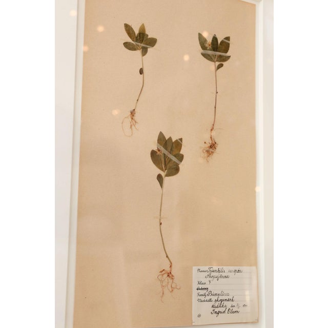 Framed Set of Four Herbaria For Sale - Image 9 of 13