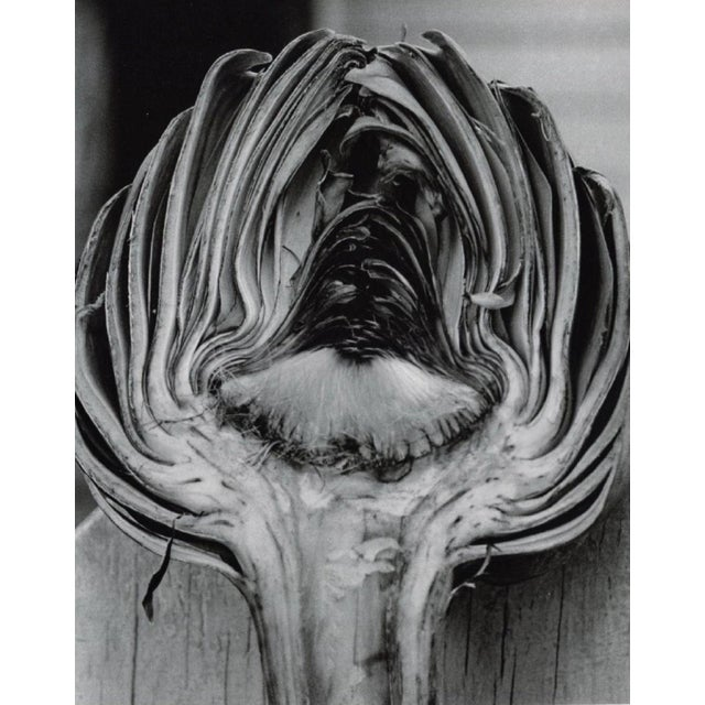 Mid-Century Modern Cynara Scolymus by Horst P. Horst, 1945 For Sale - Image 3 of 3