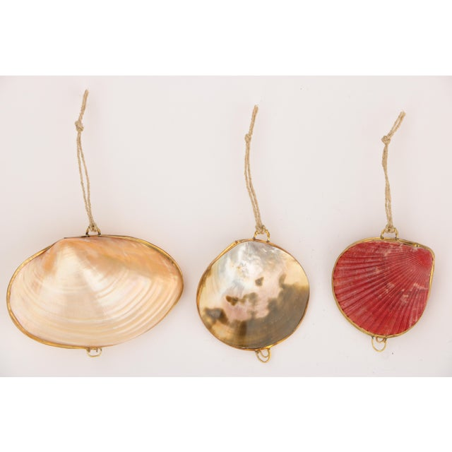 Set of six assorted natural seashell ornaments with brass hinges, clasps, and trim. Each opens to serve as a small...
