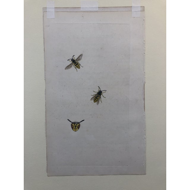 English Traditional 19th Century Insect Hand Colored Print For Sale - Image 3 of 4