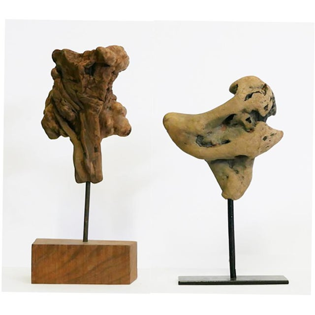 2 Pieces of Burl on Stands Burls yield a very peculiar and highly figured wood, known for its beauty and rarity. It is...