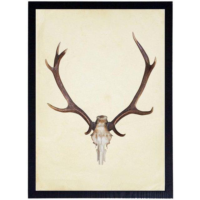 Vertical Antlers