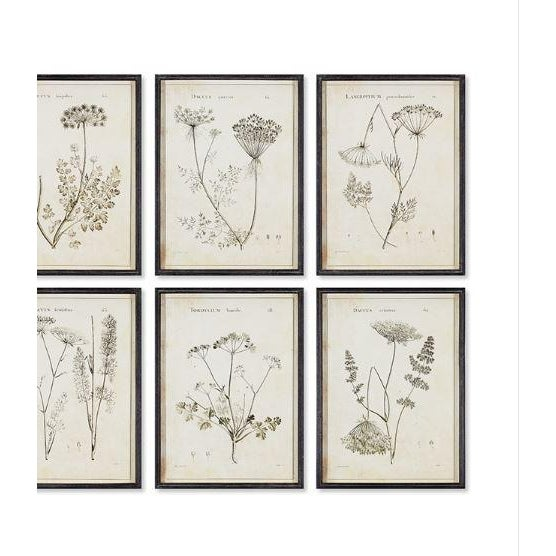 Farmhouse Wildflower Study Illustration Prints - Set of 6 For Sale - Image 3 of 4