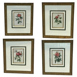 Set of 4 Vintage English Botanical Rose Prints in Classic Wood Frames