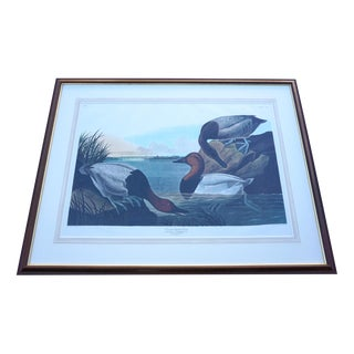 """John James Audubon """"Canvas backed Duck"""" by R.Havell For Sale"""