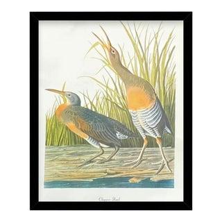 Custom Black Wood Frame of Authentic Vintage John James Audubon Clapper Rail Bird & Botanical Print For Sale