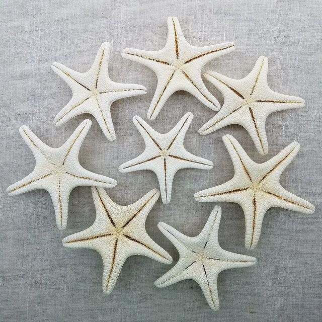 Shell Natural Starfish Specimen, 8 Pieces For Sale - Image 7 of 8