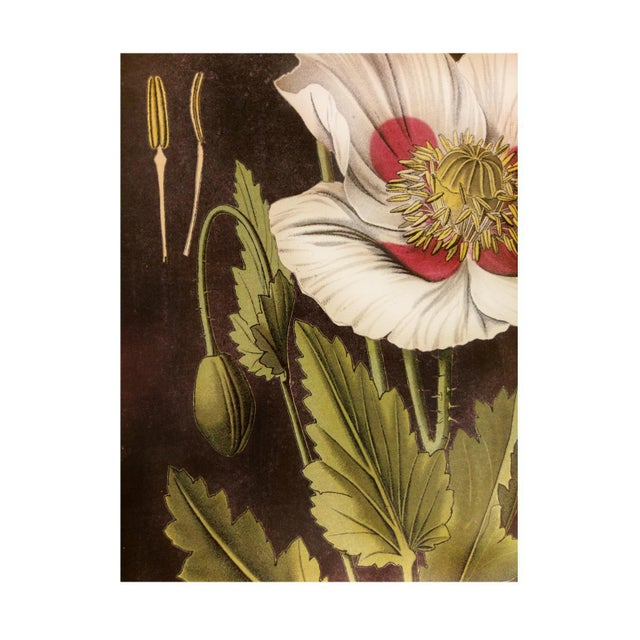Framed White Flower Botanical Print - Image 3 of 4