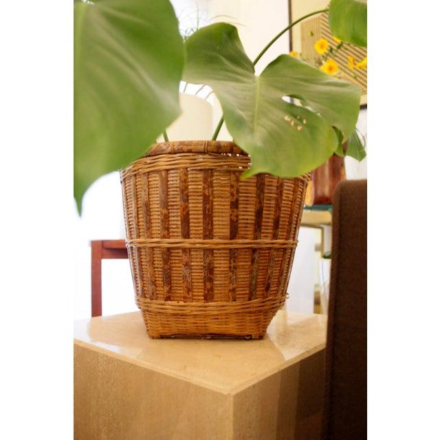 Wood Organic Modern Rattan Planter Basket For Sale - Image 7 of 8