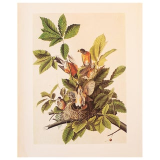 1960s American Robin Cottage Style Print by John James Audubon For Sale
